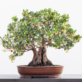10-animabonsai-12.2012