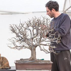 07-Prunus-cerasifera-01.2014