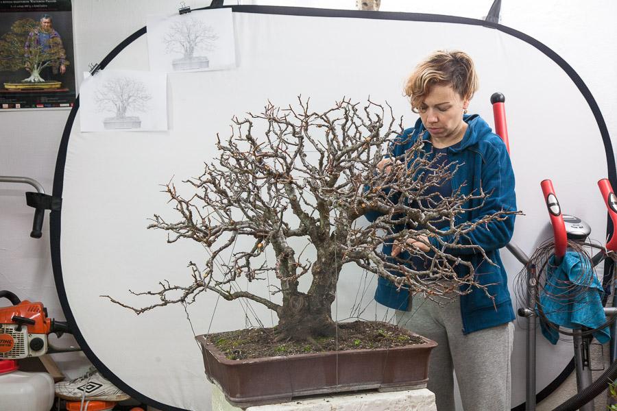 Prunus cerasifera #08