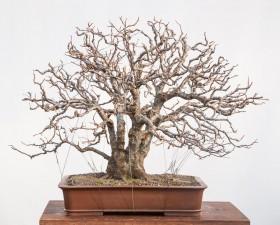 08-Prunus-cerasifera-01.2015