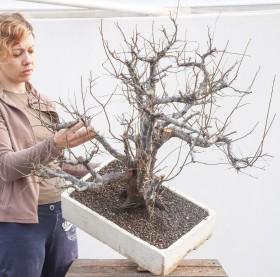 56_Prunus-cerasifera_h-75cm-2